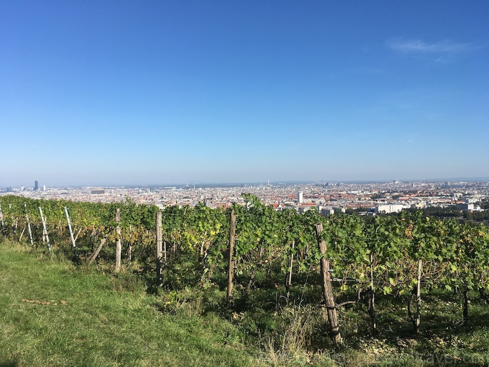 Panoramic view over Vienna from the vineyards outside the city