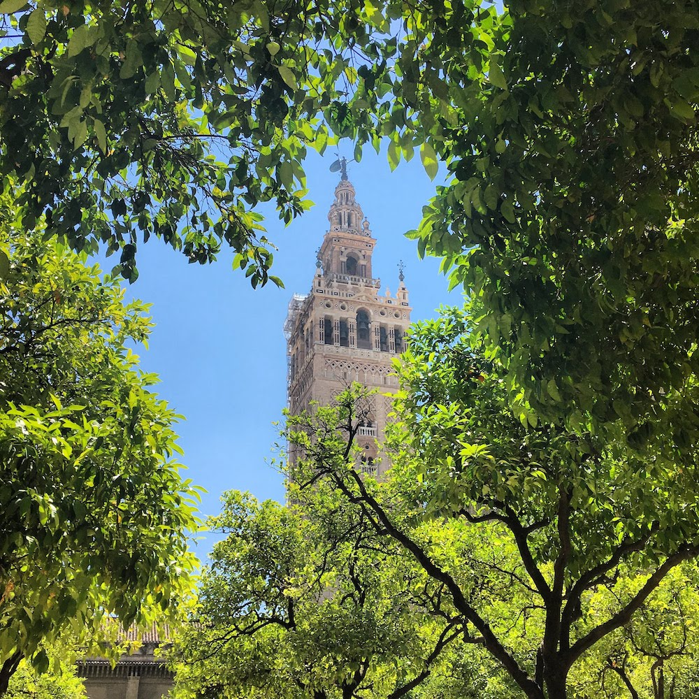 La Giralda as seen from the orange garden of Seville's Cathedral during our holiday in Andalusia