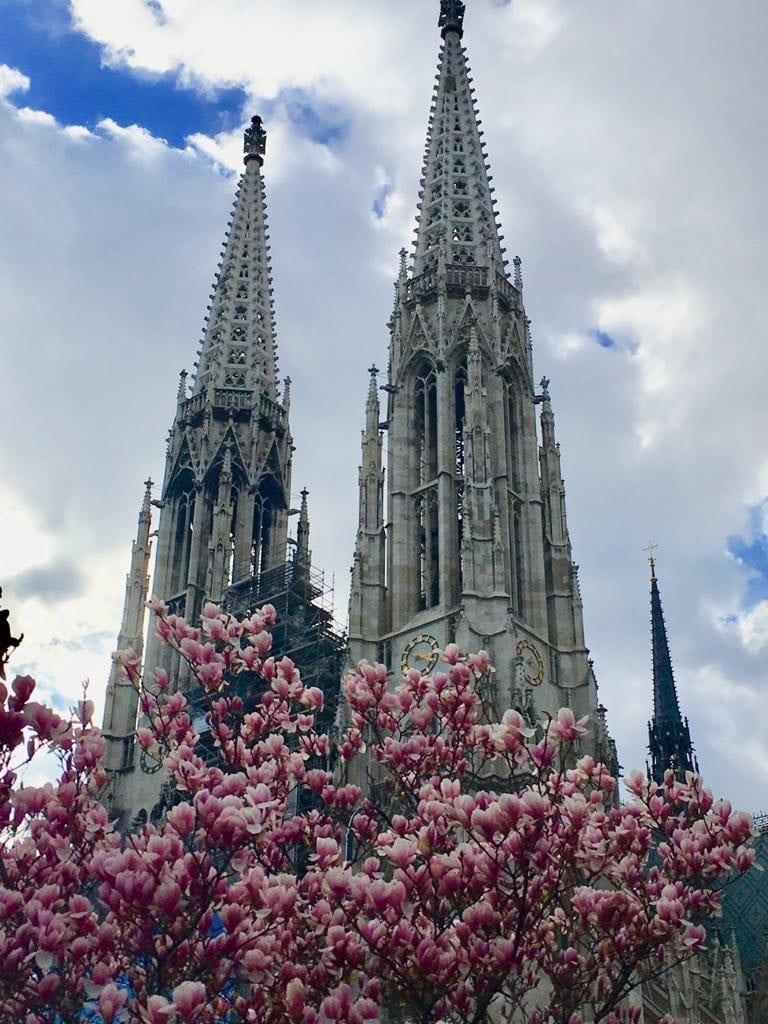 best time to visit Vienna - spring magnolia blossoms next to Votivkirche, Austria