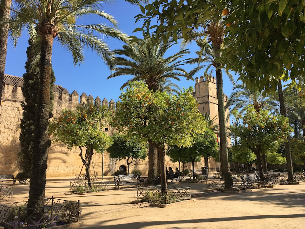 Orange trees in a park in front of the Alcazar, Cordoba