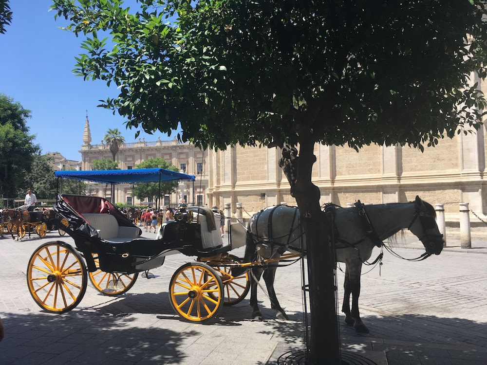 A horse-drawn carriage under a tree in Seville city center.