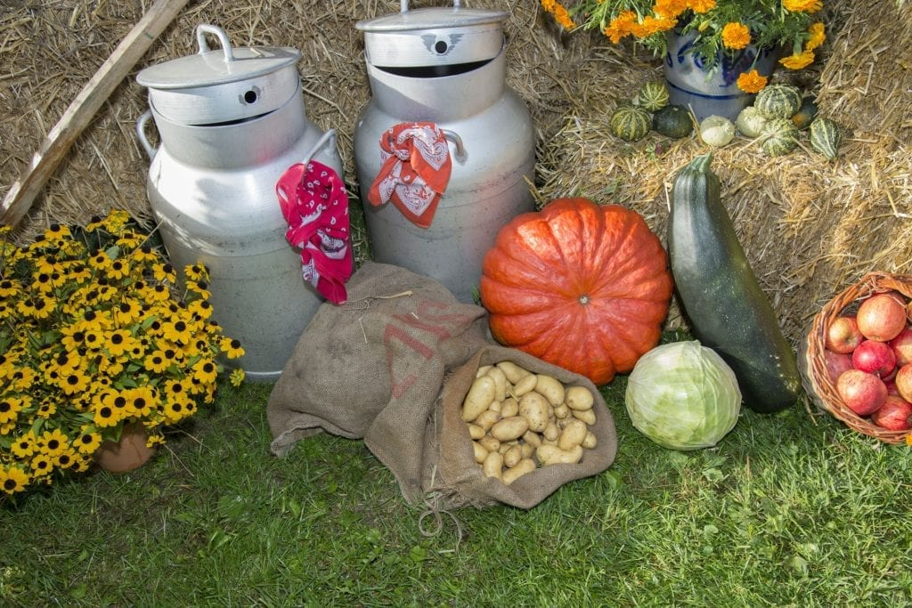 Thanksgiving setup with pumpkins and autumn produce - autumn in Vienna
