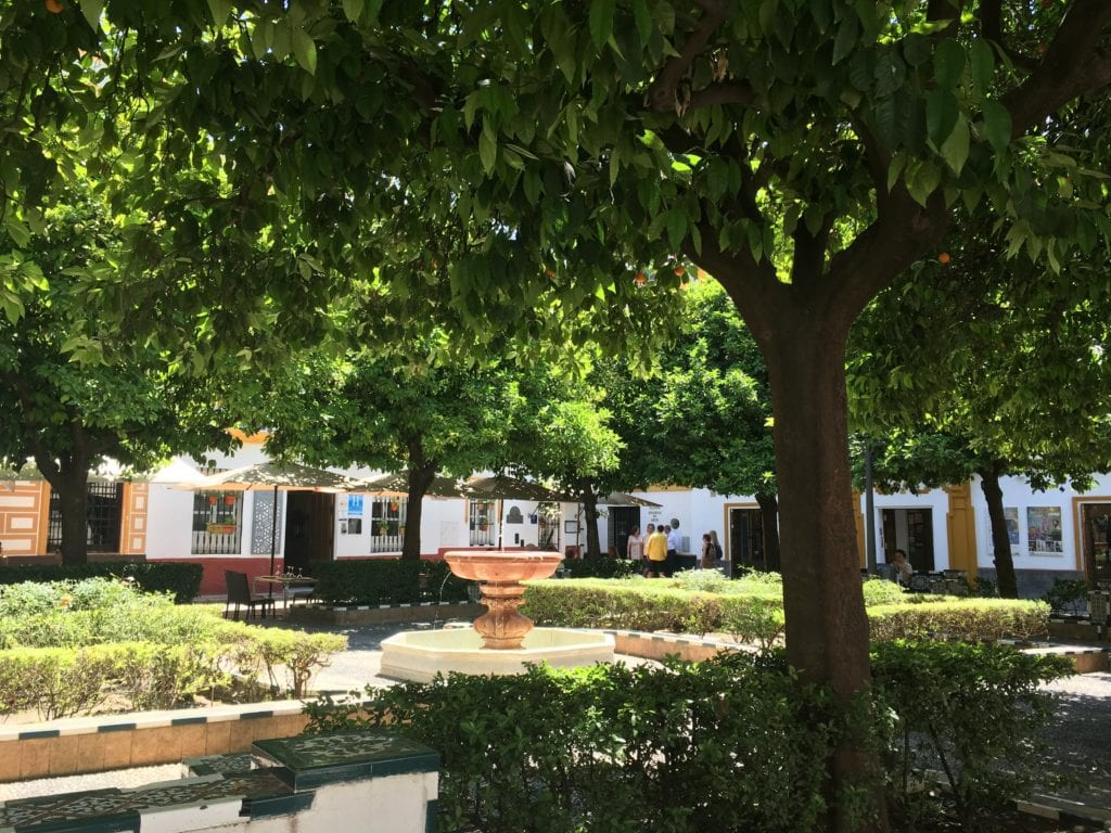 Where to eat in Seville - shadow square, orange trees, Spain