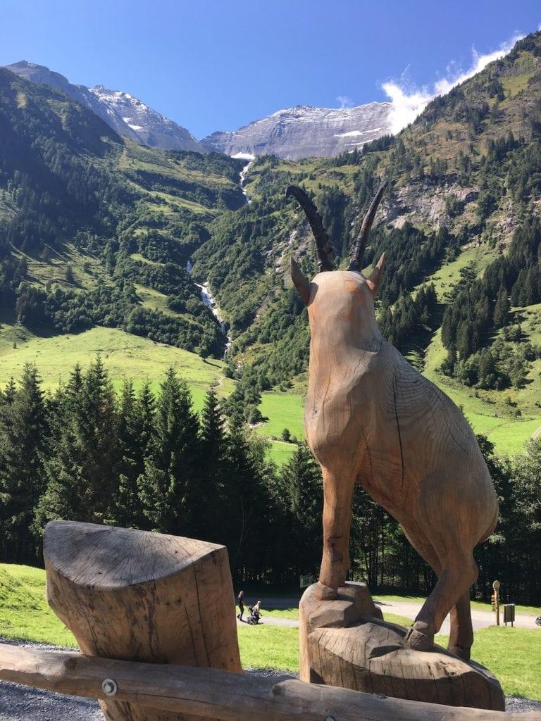 Wild and Adventure Park Ferleiten -  Austria summer holiday
